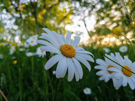Flowers, Nature, Flower, Spring, Plant, Beauty, Garden