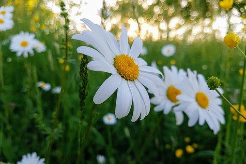 Nature, Meadow, Landscape, Grass, Summer, Mountain, Sky