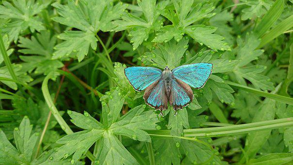 Butterfly, Green Butterfly, Blue Butterfly, Nature