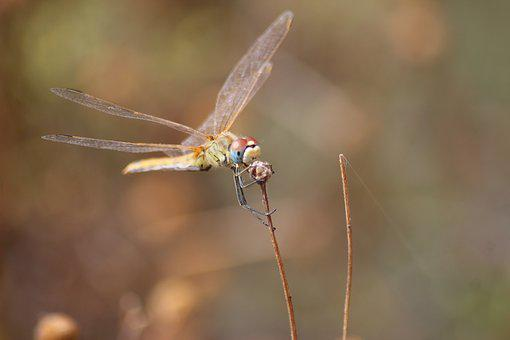 Dragonfly, Insects, Nature, Animal, Green, Eye, Beetle