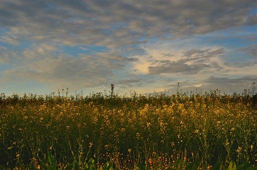 Field, Sky, Landscape, Nature, Clouds, Meadow, Blue
