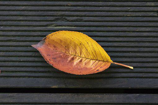 Leaves, Autumn, Leaf, The Leaves, Deciduous, Wood