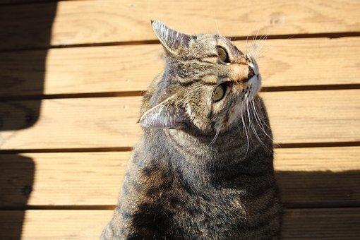 Cat, Domestic Cat, Moggie, Tabby, Sitting, Pet, Feline