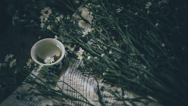 Landscape, Tea, Nature, Green, Agriculture, Mountain