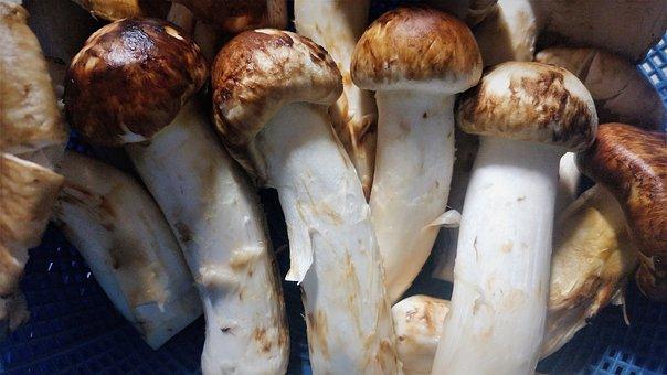 Matsutake Mushrooms, Natural Mushrooms, Pine Scent