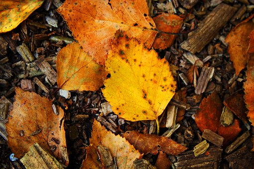 Autumn, Leaf, Nature, Forest, Leaves, Mood, Fall Color
