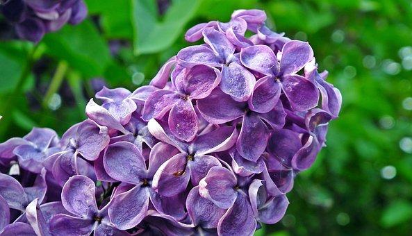 Without, Violet, Sprig, Nature, Spring, Decorative