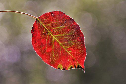 Autumn, Leaf, Mood, Park, Red, Nature, Bokeh, Foliage