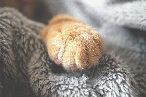 Paw, Furry, Cat, Cute, Fluffy, Pet, Kitty, Kitten