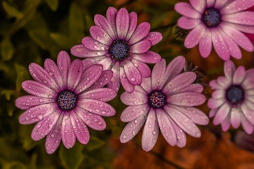 Flower, Garden, Nature, Summer, Purple, Color, Petals