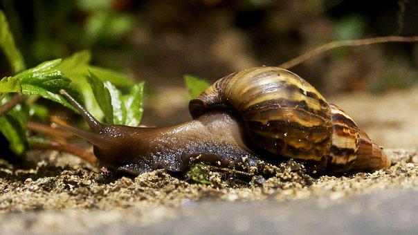 Snail, House, Animal, Nature, Shell, Crawl, Slowly