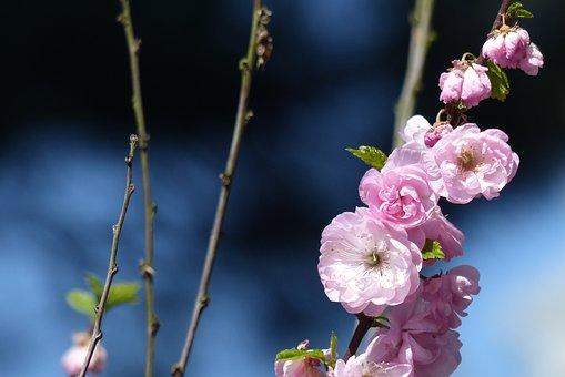 Flower, Nature, Blossom, Bloom, Plant, Summer, Spring