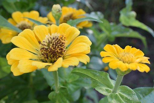 Colombia, Flowers, Petal, Garden, Field, Summer