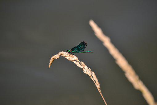 Dragonfly, Green, Insect, Nature, Summer