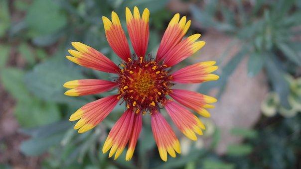 Flower, Macro, Flowers, Garden, Summer