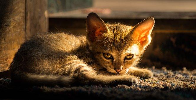 Cat, Evening Light, Kitten, Autumn, Sun, Light, Sunset
