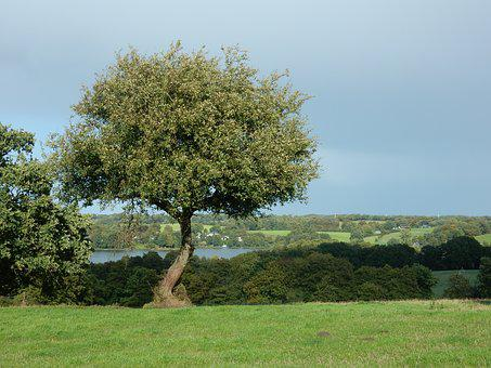 Tree, Lake, Landscape, Hilly, Sun, Forbids
