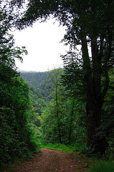 Forest, Green, Nature, Rize, Turkey, Tree, Road, Mud
