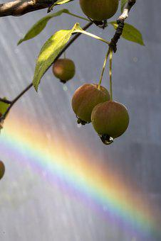 Fountain, Rainbow, Water, Walk, Garden