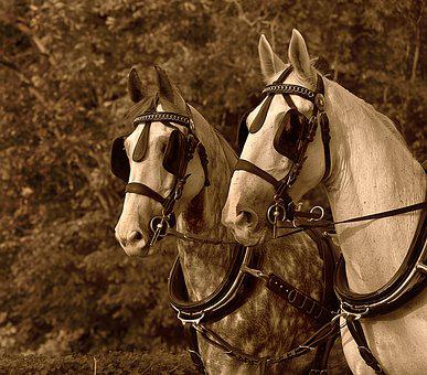 Cart Horse, Harnessed, Blinkers, Bridle, Rein, Animal