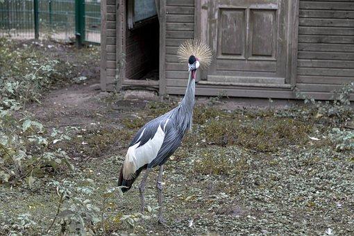 Bird, Duck, Feather, Headdress, Bill, Animal World