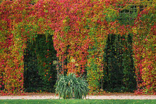 Pergola, Arches, Autumn Colours, Garden, Leaves