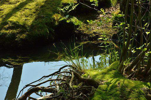 Lake, Summer, Aue, Forest, Sun, Light, Shadow, Rest