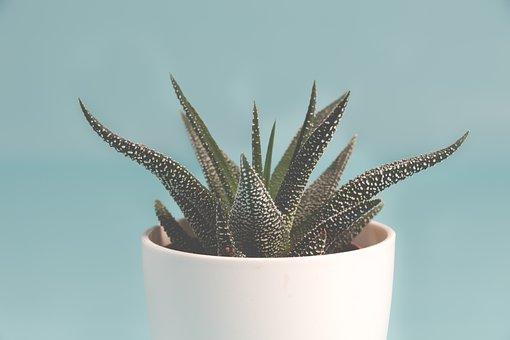 Plant, Succulent Plant, Background, Green, Nature