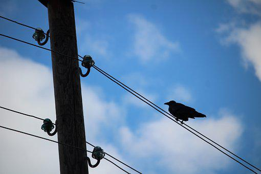 Bird, Air Cable, Sky, Blue, Clouds, Out Of Date, Phone