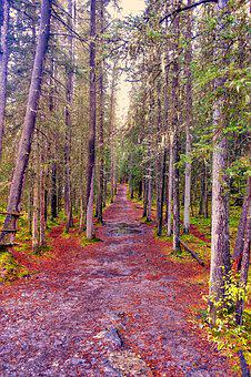 Path, Track, Forest, Colours, Hiking, Trail, Walk