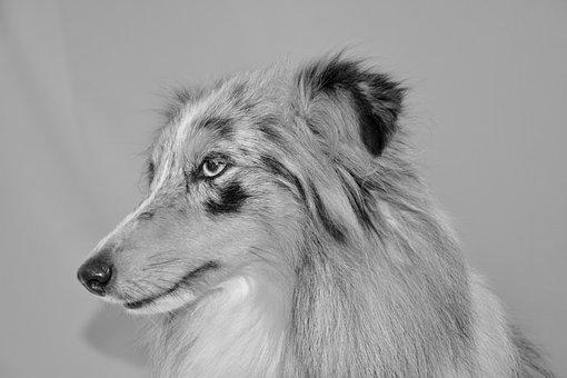 Dog, Dog Photo Black White, Dog Bounty Blue