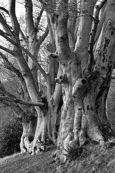 Trees, Forest, Elm, Nature, Landscape, Path, Fog