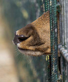 Roe Deer, Snout, Mouth, Fence, Enclosure, Limit