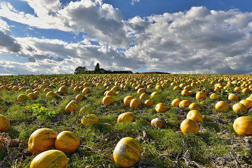 Nature, Landscape, Field, Pumpkin Box, Pumpkins, Sky