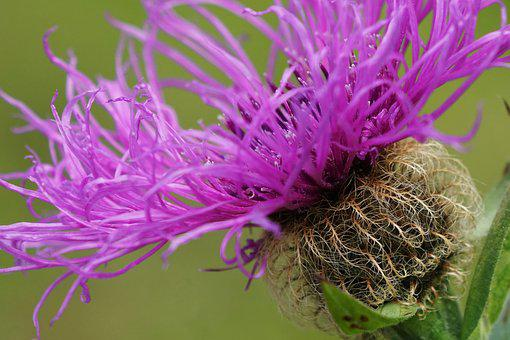 Flower, Macro, Detail, Spntanei, Nature, Close, Petals