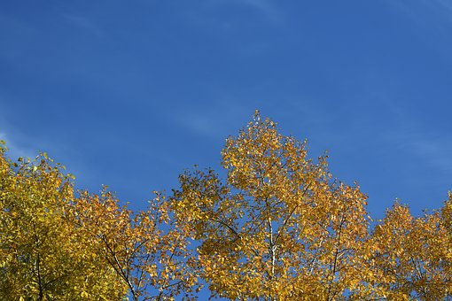Gold, Autumn, Foliage, Yellow, Sky, Blue