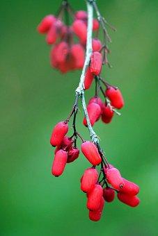 Soft Fruits, Forest, Fruits, Macro, Detail, Fruit