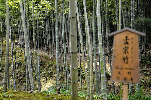 Forest, Bamboo, Japan, Trees, Nature, Green, East