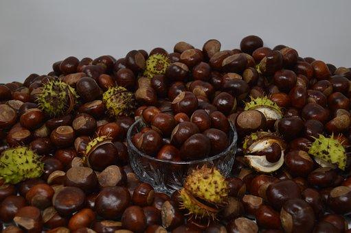Conker, Conkers, Horse Chestnut