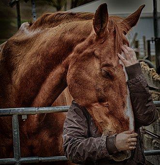 Love For Animals, Friendship, Horse Love