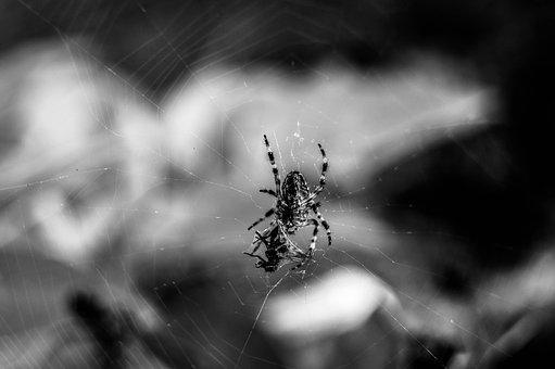 Spider, Nature, Hunting, Victim, Biology, Insect, Macro