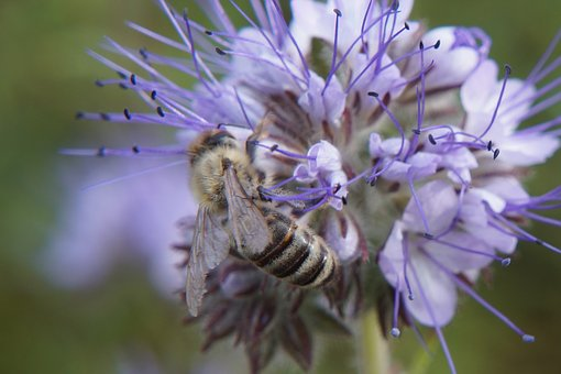 Nature, Bee, Wasp, Close, Close Up, Insect, Blossom