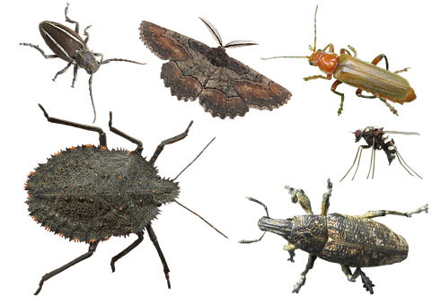 Insects, Various, Insect, Bug, Bugs, Isolated