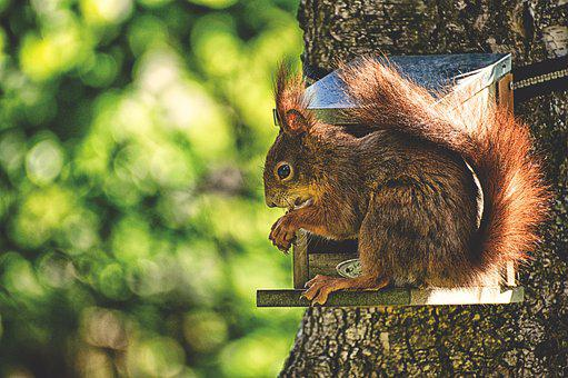 Squirrel, Nager, Cute, Nature, Rodent, Garden, Eat