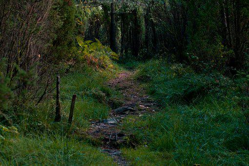 Forestpath, Forest, Path, Nature, Norway, North Sea