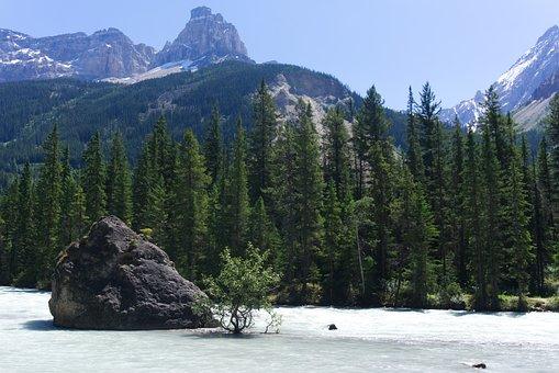 Nature, Tree, Kicking Horse River, Green, Landscape