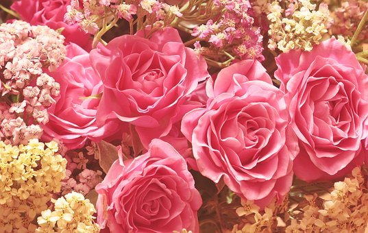 Roses, Noble Roses, Romantic, Pink, Flower, Beauty