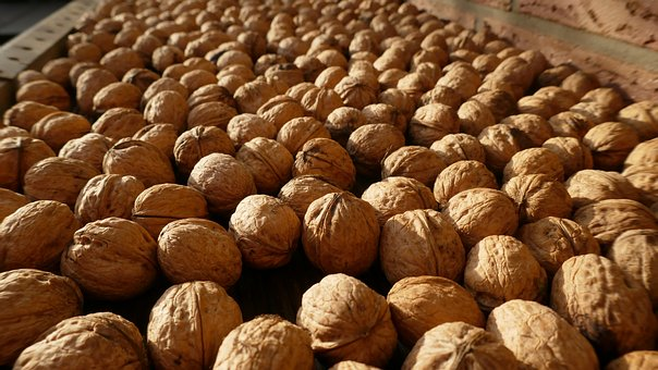 Walnuts, Nuts, Harvest, Food, Healthy, Nutrition