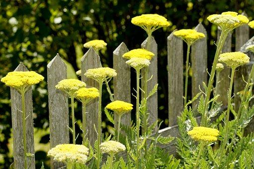 Fence, Flowers, Yellow, Green, Garden, Wood, Plank