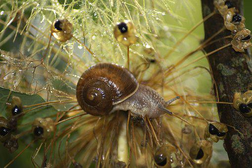 Garden Snail, Snail, Shell, Animal, Nature, Slowly
